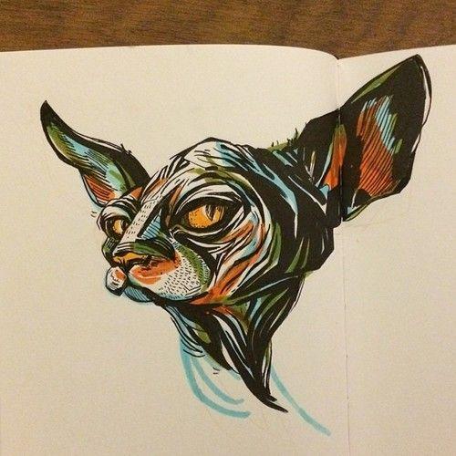 Sphynx Cat - sketch by Jacqui Oakley