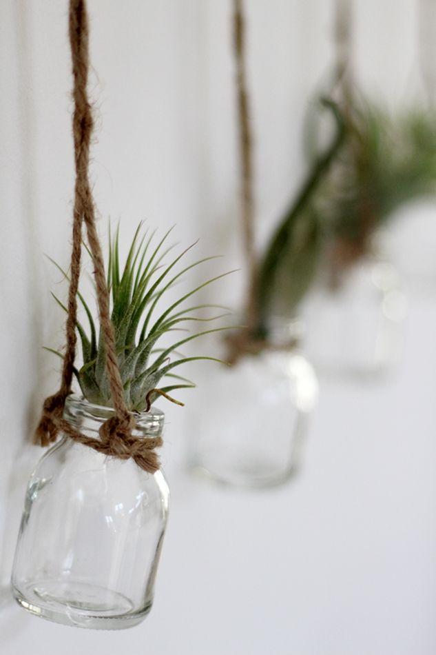 Genau das Richtige für mich | Luftpflanzen | Plants