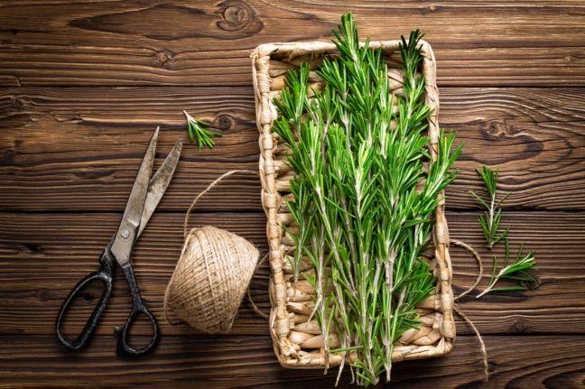 Rozmaryn, Zielona herbata w oczyszczaniu trzustki i ochroną przed nowotworem trzustki