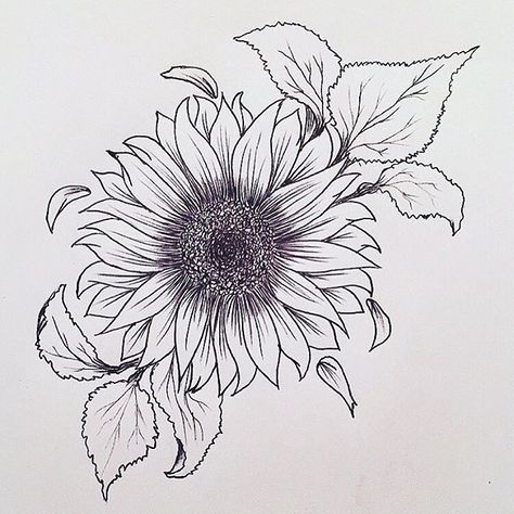 Sunflower tattoo. Really liking this.