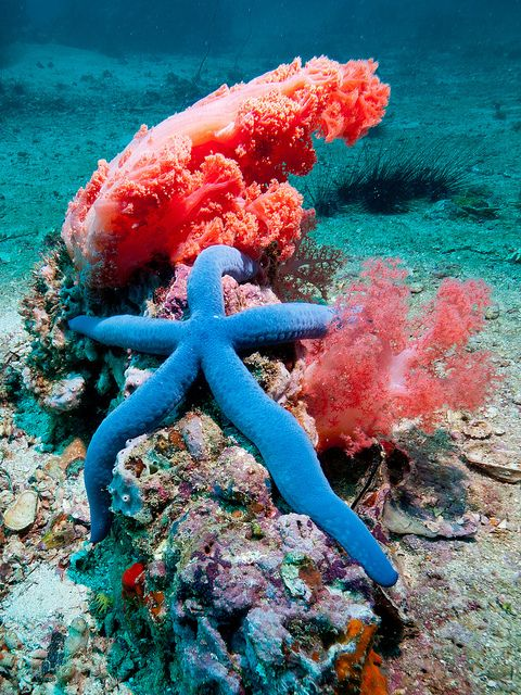 50 best images about Starfish of the Ocean - Sea Star on ...