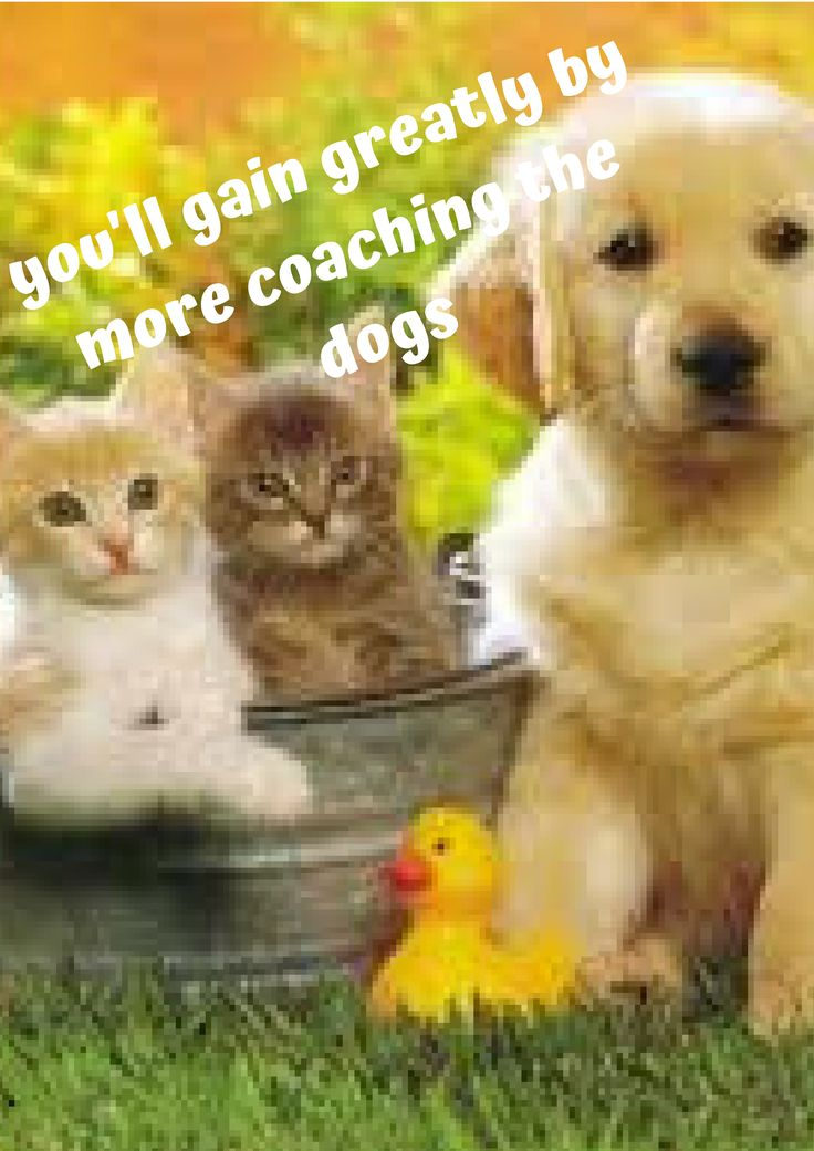 Hence, the foremost important step in their coaching is