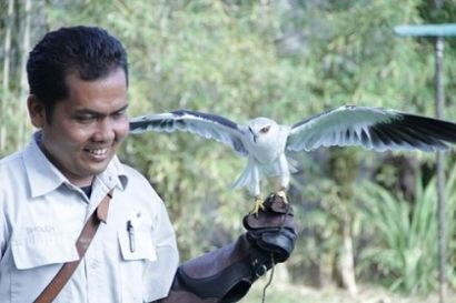 The largest and finest collection of Indonesian birds the world, plus exotic birds from Africa and South America....