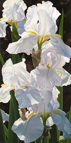 Five White Irises - Brian Davis - oil on canvas
