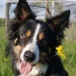 Problemhund – ein Erfahrungsbericht (Teil 2)