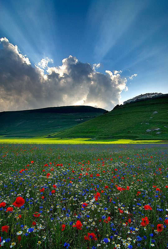 Wild flowers near Castelluccio -- a village in Umbria, in the Apennine Mountains of central Italy... <3<3<3
