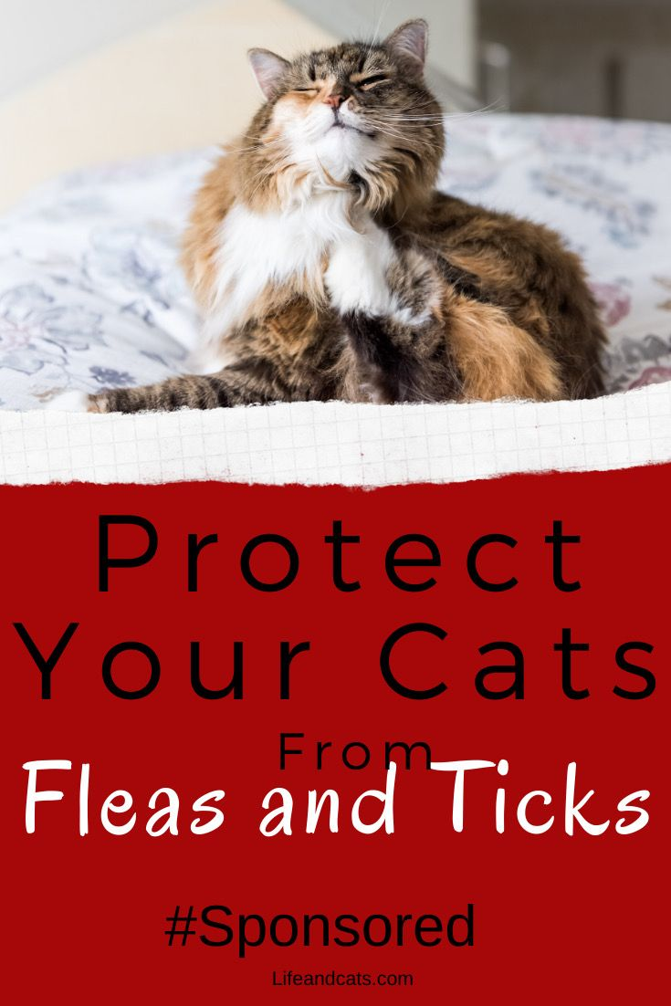 How To Protect Your Cat From Fleas And Ticks Life Cats In 2020 Pet Care Cats Cat Care Cat Health