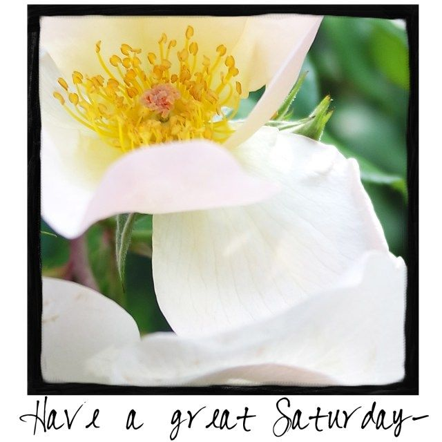 Have a Great Saturday! 12-17-16