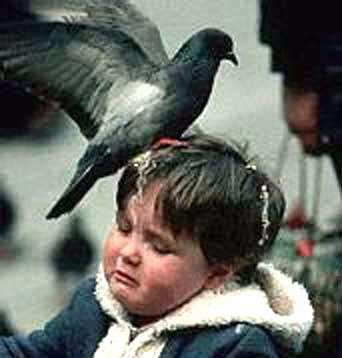 Why pigeons deserve to die: what other species feels it has the right to treat us like a toilet?