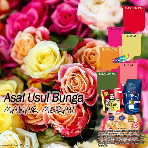 Dari semua jenis bunga mawar mayoritas orang paling mengagumi mawar merah. Ia dipercaya sebagai lambang kasih sayang dan romantisme. Tahukah Anda kawan EMCO, mawar merah diperkirakan berasal dari Asia karena ternyata hingga abad ke-19 mawar-mawar yang ada di Eropa hanyalah berwarna merah muda dan putih. #EMCOLUX #catkayubesi #warnawarni #indonesia #surabaya #jakarta #depok #tangerang #bogor #bekasi #bandung #bali #banyuwangi #denpasar #jember #jogja