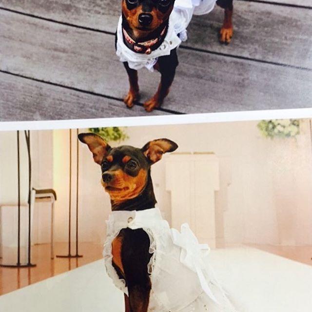 先日撮影しておりました、ワンちゃんの写真。この夏より大切な家族の一員である愛犬と一緒に結婚式、披露宴が可能になります! 詳しくはブライダルスタッフまでお問い合わせください💁 #ホテルグランミラージュ #グランミラージュウェディング#ワンちゃん #犬#愛犬#結婚式#披露宴#前撮り#dog #魚津#黒部#入善#朝日町