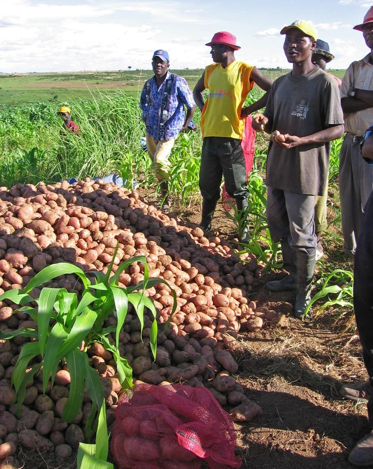 Africa Farmers In Hookup Site South