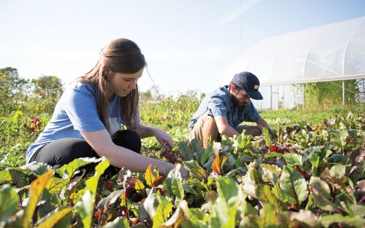 Sustainable Agriculture Project accepting research proposals - research proposals