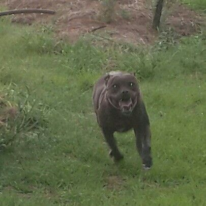 My Dog in Africa
