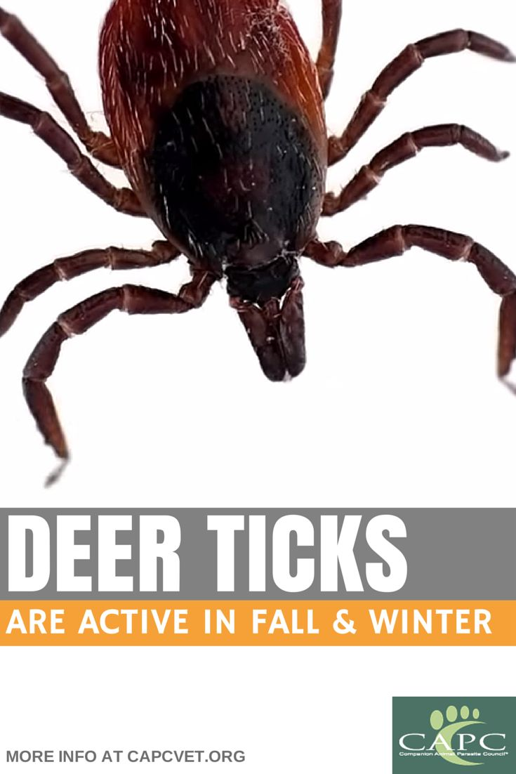 67 best fleas and ticks and mites and worms oh my images on