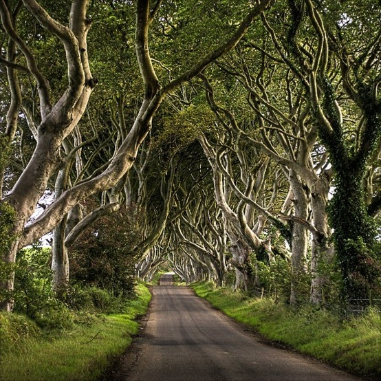 LOVE tree-lined roads i-want-to-go-to-there