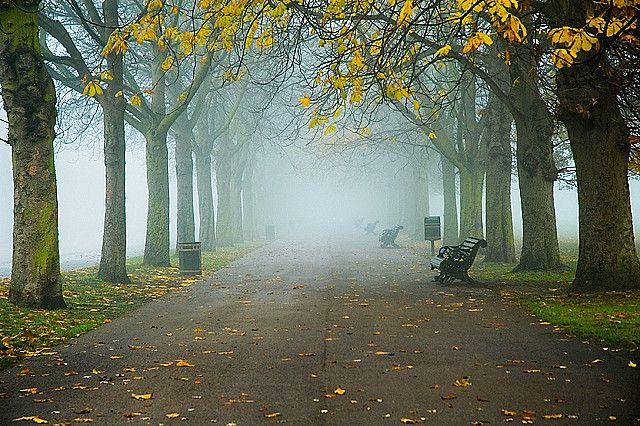 Foggy Greewich Park, London photo via piccsy