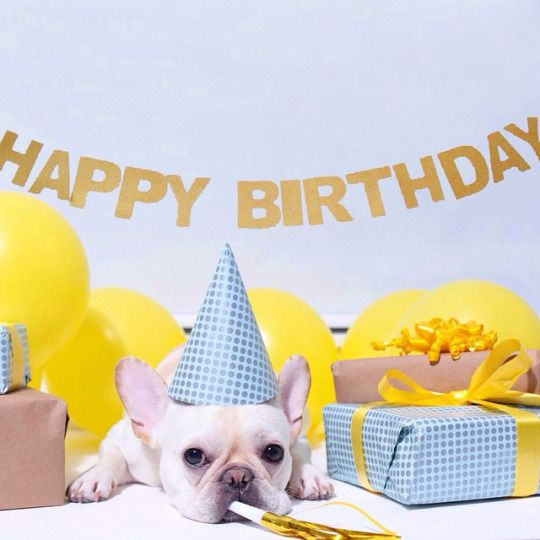 """Whoopee......another Birthday"", French Bulldog,mvia Batpig & Me Tumble It."