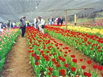Resultado de imagen para imagenes de cultivos de flores colombianas