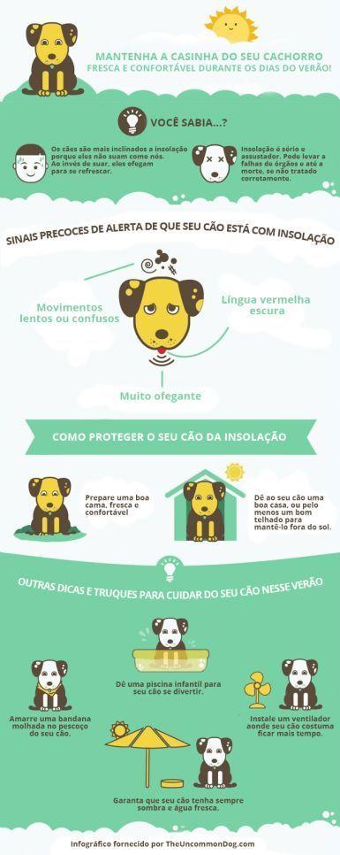Como proteger o seu cão da insolação: