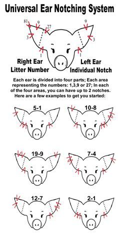 pig ear notching | Ear Notch Diagram. My life. I think I could probably still ear notch in my sleep.