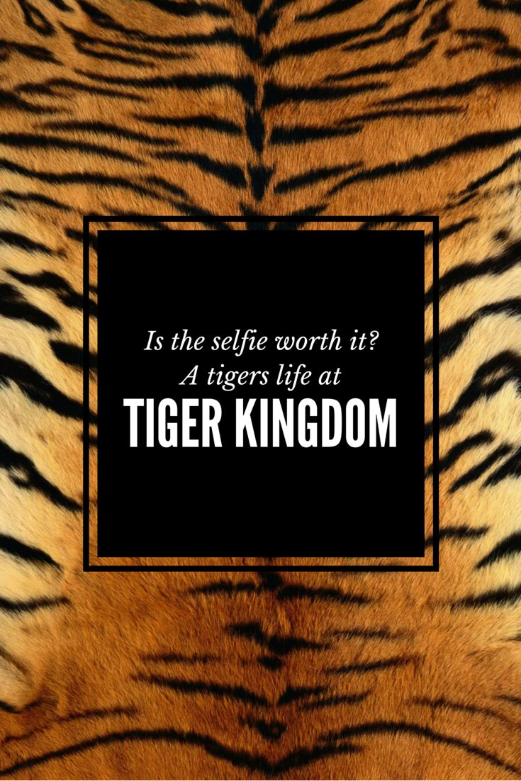 Thailand's Tiger Kingdom