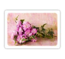 Sticker. #stocks #scentedstocks #pinkstocks #pinkscentedstocks #stockflowers #pinkstockflowers #flowersandivy #flowersandribbon #flowers #pinkflowers #sandrafoster #sandrafosterredbubble