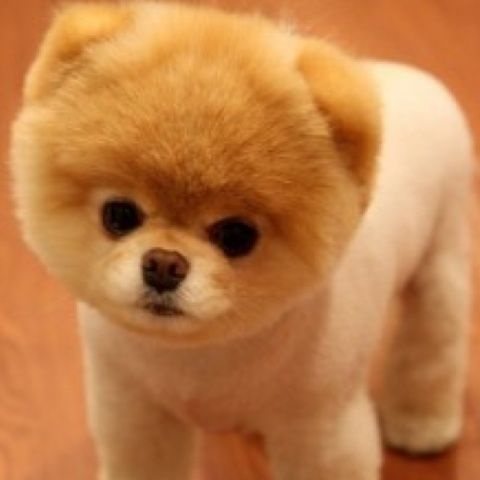 thiss dog iss soss cutte waant himm <3
