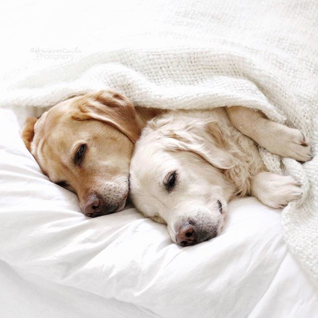 Mondays take a little more coffee and a few more naps  ⠀⠀⠀⠀⠀⠀⠀⠀⠀⠀⠀⠀⠀⠀⠀⠀⠀⠀⠀⠀⠀⠀⠀⠀⠀⠀⠀⠀⠀⠀#dogs #puppies #pup #cute #eyes #instagood #dogs_of_instagram  #animals #petstagram #ilovemydog #instagramdogs  #dogstagram #puppy #dogoftheday #lovedogs #lovepuppies #