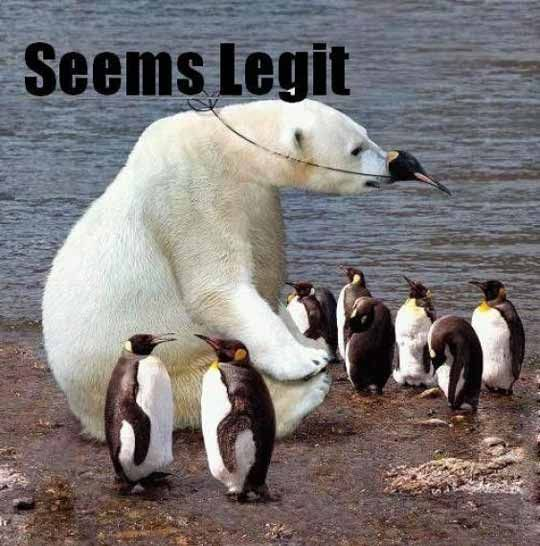 lol!Laugh, Funny Pics, Polar Bears, Funny Pictures, Polarbear, Humor, Penguins, Funny Animal, Giggles
