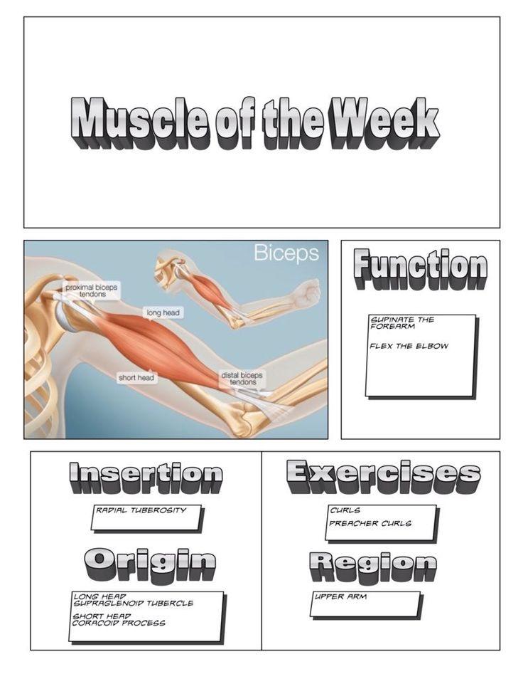 Muscle of the Week - @Dzachary21