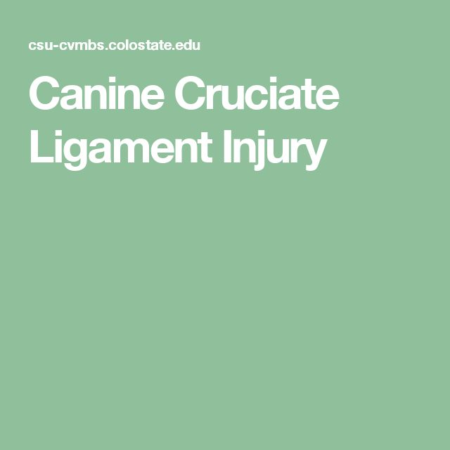 Canine Cruciate Ligament Injury