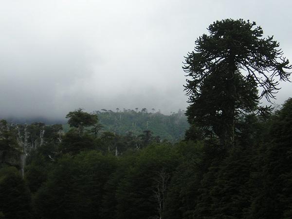 Parque Conguillio, Chile