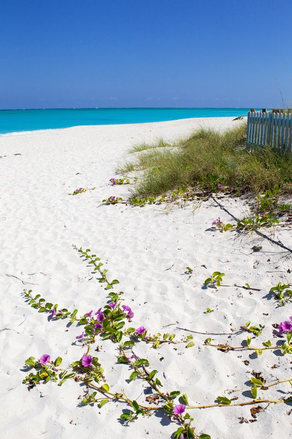 Grace Bay Beach in Providenciales - Turks & Caicos. Gorgeous! I want to go. Love her vibrant photography. @latartinegourmande.com