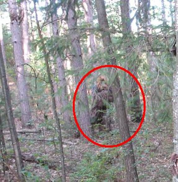 "bigfoot real or not essay Bigfoot conclusion evidence reasoning conclusion claim during this lab, and using the data from the tables and graphs we have come to the conclusion that the creature or ""bigfoot"" is definitely fake."