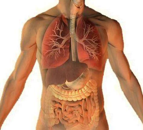 8 piante utili alla salute dell'apparato respiratorio -TOSSILAGGINE