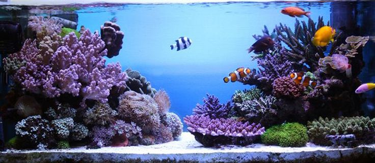 541 best Aquascaping images on Pinterest | Reef aquarium ...