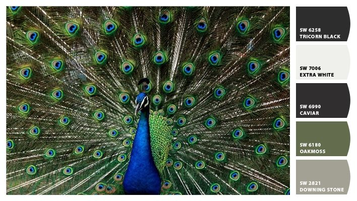 Peacock paint colors by Sherwin-Williams