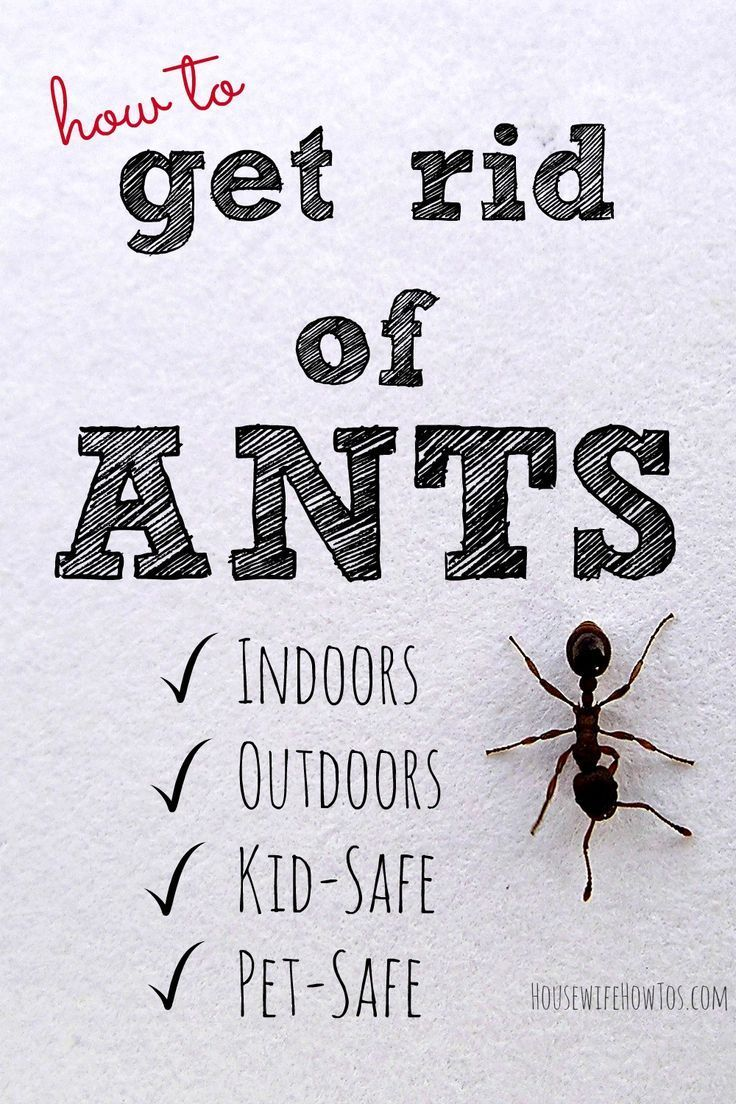 It's that time of year when ants are everywhere! Here's how to get rid of ants indoors and out using methods and ingredients that are kid and pet-safe!