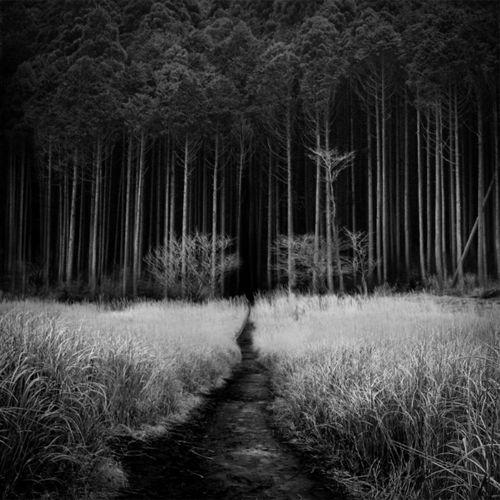 phytos:    Kiyo Murakami - Calling