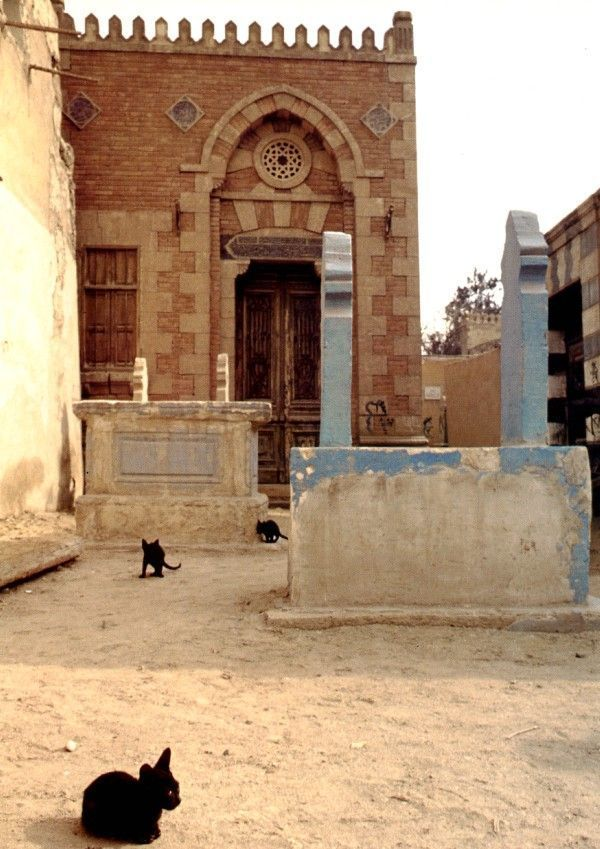 The mausoleum of Sultan Qa'it Bay in theCity of the Dead is teeming with black kittens. Find out more via http://www.traveling-cats.com/2018/01/cats-from-cairo-egypt.html