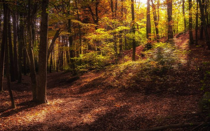 Download wallpapers autumn forest, evening, trees, fallen leaves, autumn