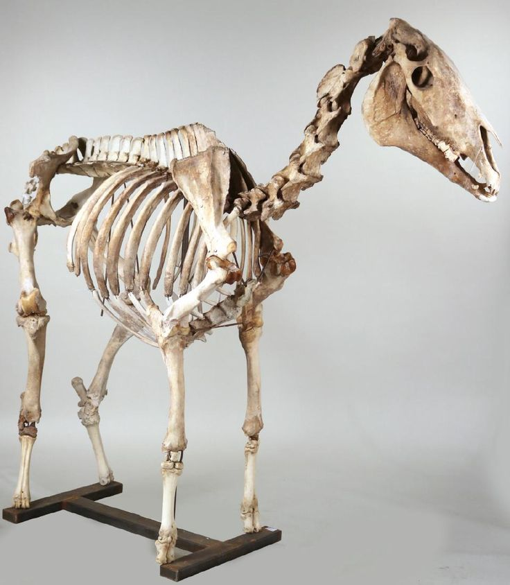65 best Equine Anatomy for Sculpture images on Pinterest | Animal ...