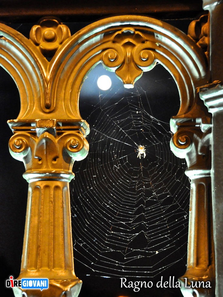 Spider Web Moon - Paris, France