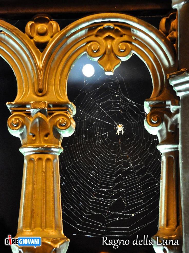 Spider Web Moon - Paris, France