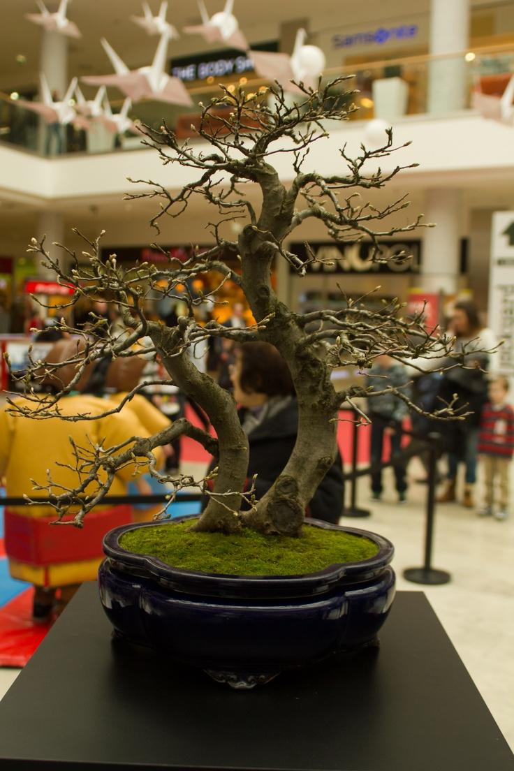 #bonsai #japan #allee
