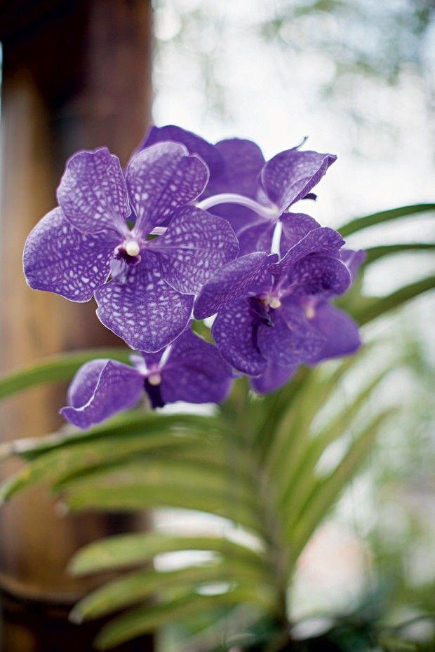 Dicas para cuidar das orquídeas - Casa e Jardim | Orquídeas