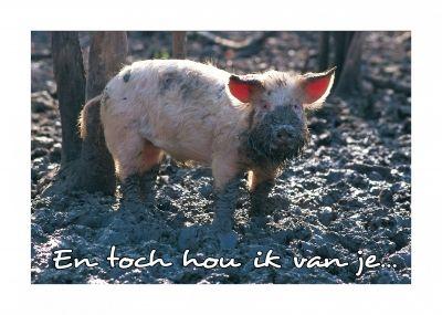 Vieze varken in de modder blanco kaart van Animal Fun versturen bij Kaartwereld: 20% korting bij het maken van een gratis account.