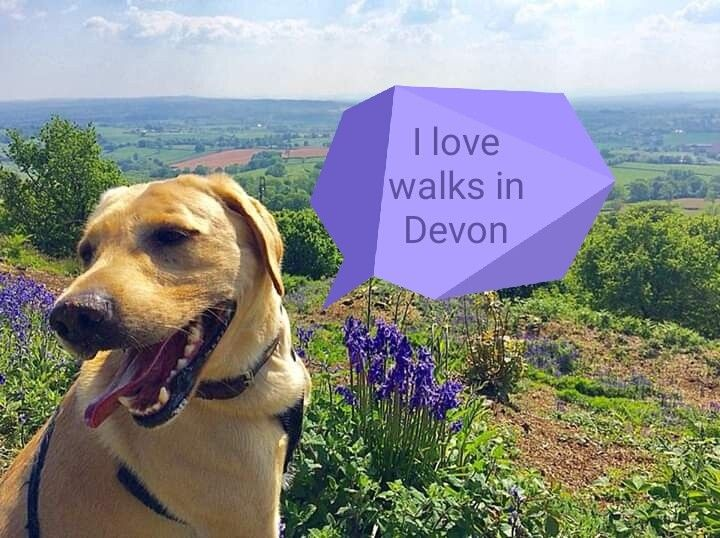 Some Nearby Walks For Dogs Near Andrewshayes Dog Walking Dogs