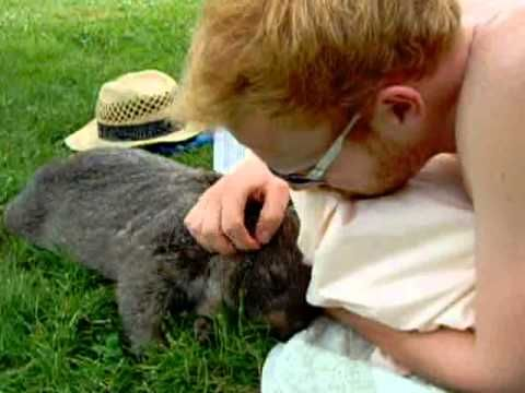 OMG melt your heart video. Douglas the wombat and his human. Douglas loves a belly rub in the sun. So sweet!!
